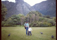 Life's a Picnic at Kirstenbosch National Botanical Garden