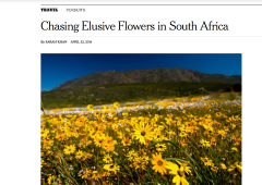 As Seen In… The New York Times